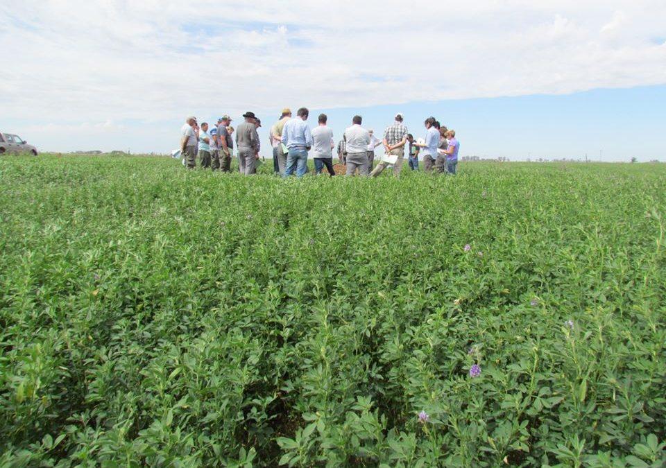 El INTA trabajará fuertemente en cultivos de cobertura en la zona de Junín y Lincoln